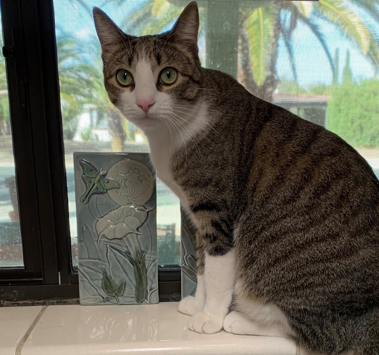 Customers cat next to tile